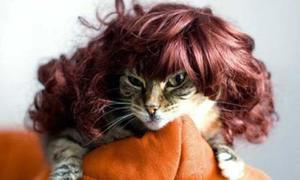 Mèo hóa thân thành Lady Gaga