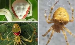 Những chú nhện có 'nụ cười' ma quái