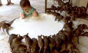 Có bao giờ hiện thân của người là... chuột???