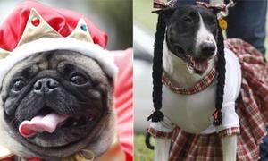 Lễ hội thú cưng tưng bừng ở Cali