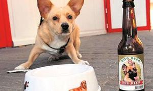 Bia dành cho chó