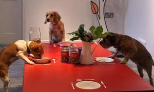 Nhà hàng số 1 thế giới dành cho chó