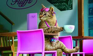 Bộ lịch cực lung linh về 'Tiểu thư' Cat 2011