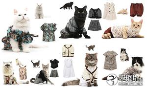 Sang trọng và quý phái bộ lịch mèo 2011 của United Bamboo