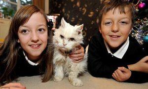 Cụ mèo 'cao tuổi' nhất nước Anh