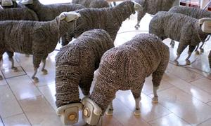 'Cừu ngộ nghĩnh' từ điện thoại hỏng
