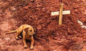 Chú chó lặng lẽ nằm bên mộ chủ