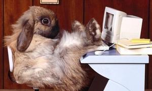Thỏ tự tin đón chào 'năm tuổi'