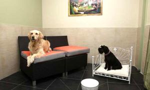 Khách sạn 4 sao xa hoa đầu tiên dành cho cún cưng
