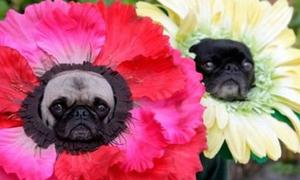 Diện đồ 'độc' cho cún xinh thêm cá tính