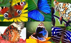 Hoa mắt với vườn bướm 'khủng' nhất Châu Á