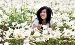 Dạo quanh Hà Nội ngắm hoa loa kèn nở trắng muốt