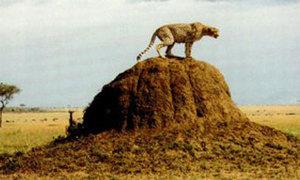Những kỳ quan khổng lồ trong thế giới động vật