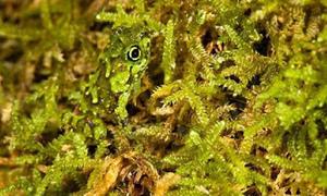 Căng mắt nhìn cao thủ ngụy trang trong thế giới động vật