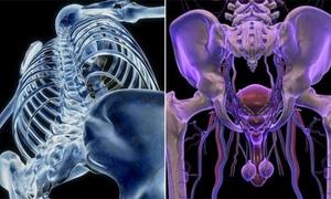 Kinh ngạc cơ thể người dưới góc nhìn 3D (2)