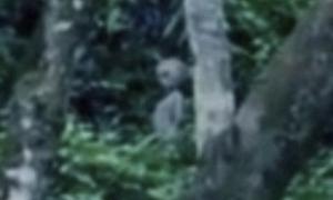 Video quay được 'người ngoài hành tinh' trong rừng Amazon