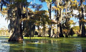 8 khu rừng nổi trên mặt nước tuyệt đẹp
