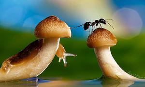 Lạc trong 'thế giới thần tiên' từ côn trùng, rau củ và túi nilon