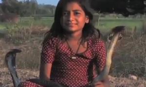 8 tuổi kết thân với 6 con hổ mang chúa