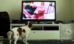 Kênh truyền hình 100% dành cho chó