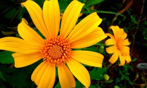 Cảm ơn chị - 'Loài hoa' của núi rừng