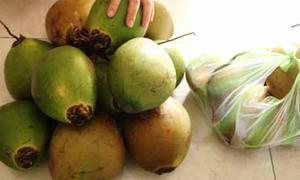 Chữa bệnh bằng trái dừa, bé gái không còn 'gây cháy'