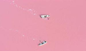 Nước hồ có màu hồng như trái dâu tây
