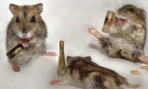 12 cung hoàng đạo khi rượu đã lê tê phê