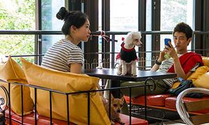 Độc đáo cà phê chó tại Hàn Quốc