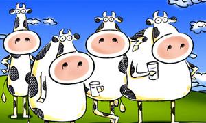 Khám phá thế giới tình bạn của bò