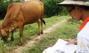 Chàng trai chăn bò đỗ thủ khoa đại học
