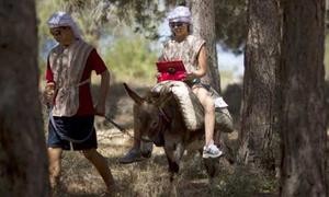 Những chú lừa trở thành 'trạm phát Wi-Fi'