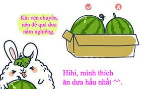 Cách chọn dưa hấu vừa tươi vừa ngọt