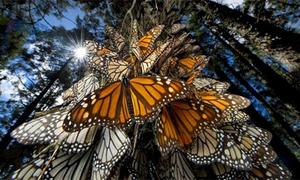 Lạc vào rừng bướm cổ tích diệu kỳ