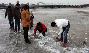 Hàng trăm nghìn con cá bị đóng băng
