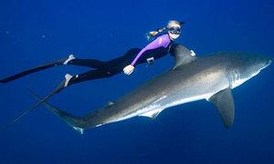 Cô gái xinh đẹp bơi cùng cá mập trắng