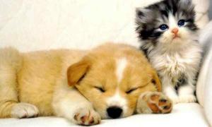 Điểm thú vị giữa người nuôi chó và người nuôi mèo