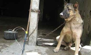 Bạn trẻ vận động 30.000 chữ ký phạt kẻ trộm chó