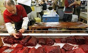 Chó nhà giàu được cho ăn thịt cá voi, tim ngựa Mông Cổ
