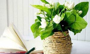 Lạ mắt lọ hoa quấn giấy xoắn giả thừng