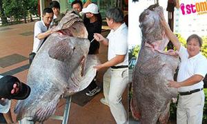 Cá khổng lồ đủ cho 700 người ăn
