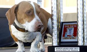Chú chó xấu nhất thế giới gây sốc vì dễ thương