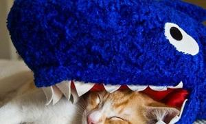 Các bạn mèo vui nhộn đội lốt cá mập