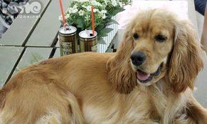 Dogi Cafe - Điểm 'hẹn hò' của các teen yêu cún