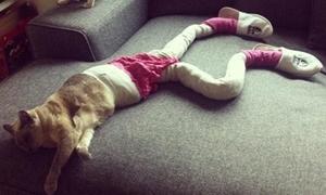 Trào lưu chụp ảnh mèo khoe chân dài độc đáo