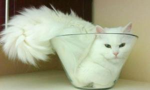 Mốt mèo ú mắc kẹt