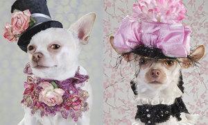 Thời trang sang chảnh cho cún cưng
