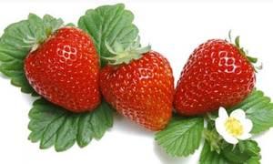 Sạch răng, thơm miệng nhờ thực phẩm tự nhiên