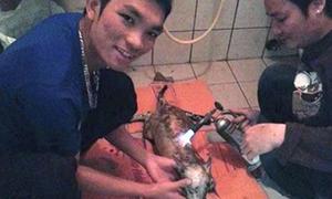 Hai thanh niên khoe ảnh giết chó gây phẫn nộ