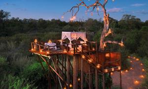 Nhà cây hoang dã giữa núi rừng Nam Phi